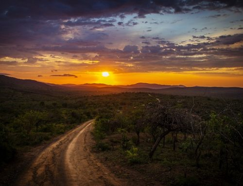 My African Experience- I Feel Like I Am Home by Judi Moreo